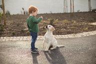 Boy giving pet puppy training treat - CUF51164