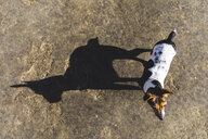 Little dog and his big shadow - WPEF01511
