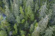 Drone point of view green treetops, Alberta, Canada - HEROF36461