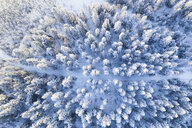 Drone point of view snow covered treetops in forest, Alberta, Canada - HEROF36467