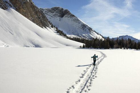 Woman cross country skiing across sunny, snow covered mountain field, Alberta, Canada - HEROF36512
