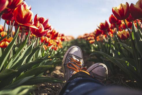Germany, woman's feet in a tulip field - ASCF01032