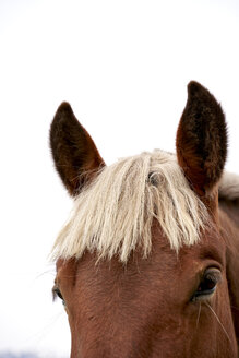 Head of horse in front of white background, partial view - GEMF02955