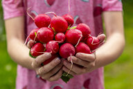 Close-up of girl holding red radish - SARF04274