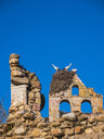 Spain, Asturias, Camposolillo, Cantabrian Mountains, storks and storks nest on a church ruin - LAF02321