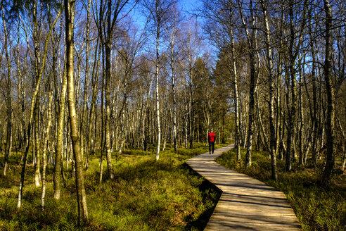 Wanderer auf dem Bohlensteg, Rotes Moor, Naturschutzgebiet, Rhön, Unterfranken, Franken, Hessen, Deutschland - LBF02571