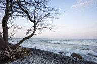 Fallen tree at stony beach, Jasmund National Park, Ruegen, Germany - WIF03904