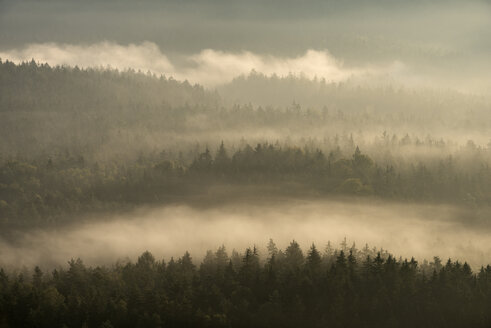 View from Gleitmannshorn to fog and forest with dramtic sunlight after sunrise. Elbe Sandstone Mountains, Saxon Switzerland National Park, Saxon Switzerland, Saxony, Germay, Europe. - RUEF02229