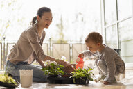 Mother and daughter planting flowers together on balcony - DIGF07048