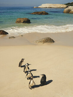 Five penguins on Boulders beach, Western Cape, South Africa - VEGF00248