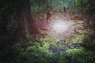 Glowing connected dots hovering in forest - BLEF03714