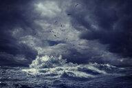 Birds flying over rough ocean waves - BLEF03774