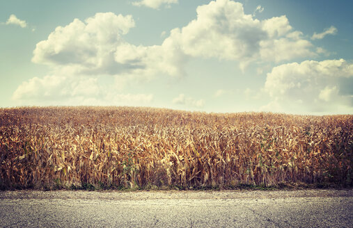 Road near brown agriculture crop field - BLEF03783