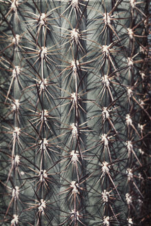 Close-up of a cactus, stings - DWIF01008
