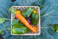 Close up of basket of fresh vegetables on leaves - BLEF04435