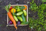 Close up of basket of fresh vegetables on garden soil - BLEF04441