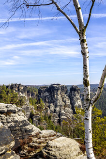 View to Elbe Sandstone Mountains with birch tree in the foreground, Saxony, Germany - PUF01506