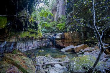 Little pond in a rock crack, Carnavaron Gorge, Queensland, Australia - RUNF02283