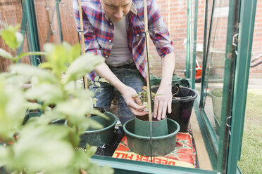 Man planting seedling in greenhouse - NMS00313