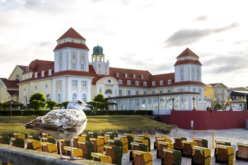 View to seaside resort with seagull in the foreground, Binz, Ruegen, Germany - PUF01523