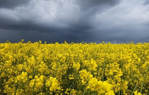 Dark clouds over rape field, Husum, Schleswig-Holstein, Germany - LHF00638