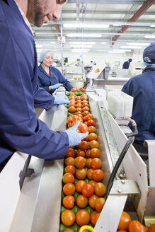Quality control worker inspecting ripe red tomatoes on production line in food processing plant - JUIF01151