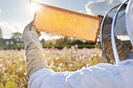 Beekeeper, holding beehive frame of honey up to the sun, in field full of flowers - JUIF01200