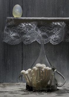 Mushrooms growing in broken glass pitcher - BLEF06294