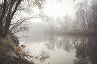 Dog exploring misty rural lake - BLEF06462