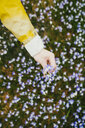 Close-up of woman picking flowers from a meadow - PSIF00293