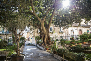 Garden of San Giovanni Cathedral in backlight, Ragusa, Sicily, Italy - MAM00740