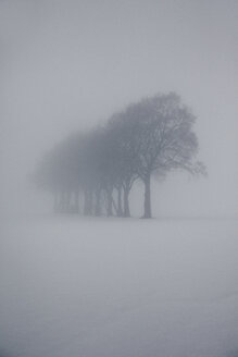 Hazy winter landscape with row of trees and raised hide - ANHF00130
