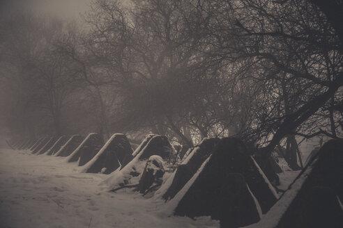 Tank barriers of World War Two in winter, Siegfried Line, Eifel, Gemany - ANHF00136