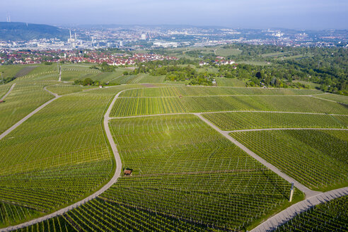 Aerial view over vineyards at Kappelberg in spring, Bad Cannstadt, Fellbach, Germany - STSF02019