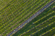 Aerial view over vineyards at Kappelberg in spring, Fellbach, Germany - STSF02022