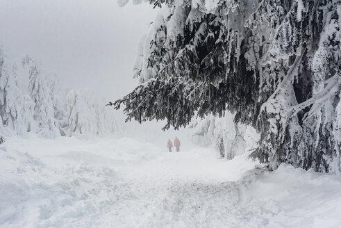Arbermandl, Deutschland, Erzgebirge, Fichtelberg, Sachsen, Schnee, Winter - MJF02362