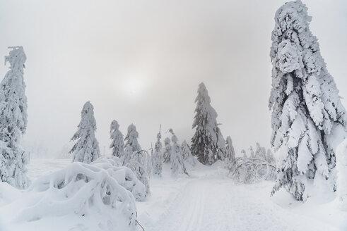 Arbermandl, Deutschland, Erzgebirge, Fichtelberg, Sachsen, Schnee, Winter - MJF02365