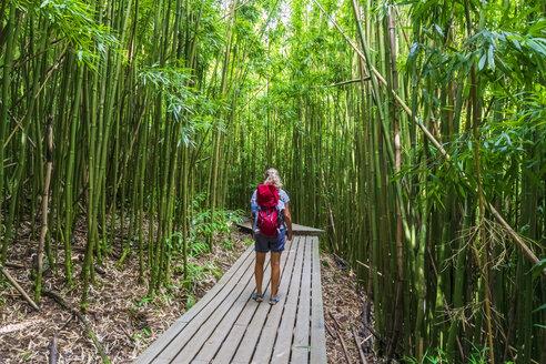 Bamboo forest, woman on Pipiwai Trail, Haleakala National Park, Maui, Hawaii, USA - FOF10871