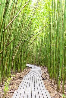 Bamboo forest, Pipiwai Trail, Haleakala National Park, Maui, Hawaii, USA - FOF10874