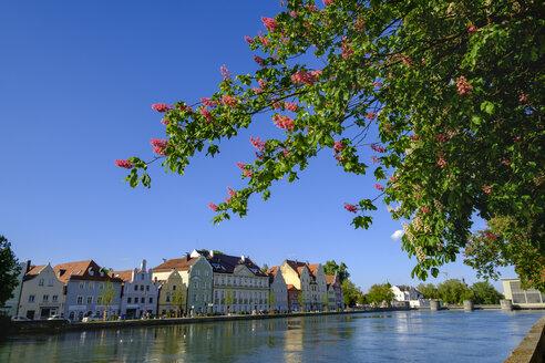 blühender Kastanienbaum, Blick über Isar zur Mühleninsel, Landshut, Niederbayern, Bayern, Deutschland - SIEF08654