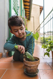 Portrait of little boy gardening on balcony - MGIF00535