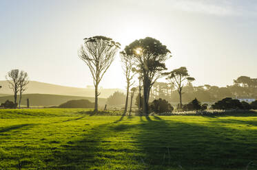Backlight of trees in green fields, the Catlins, South Island, New Zealand - RUNF02582