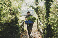 Woman walking towards camera, carrying blue crate with freshly harvested vegetables. - MINF11315