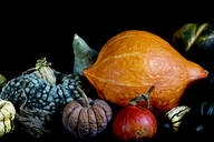 Close up of a variety of freshly harvested pumpkins on black background. - MINF11501