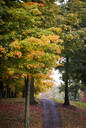 Path among trees and autumn leaves - MINF11680