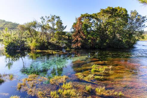 Te Waikoropupu springs declared as clearest fresh water springs in the world, Takaka, Golden bay,South Island, New Zealand - RUNF02674