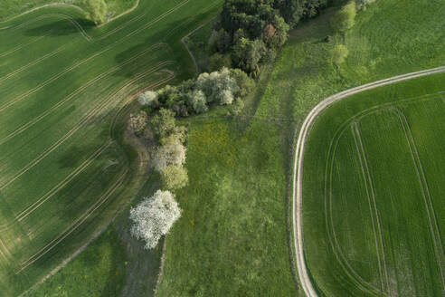 Aerial view of dirt road through landscape with meadow, trees, agricultural fields and forest, springtime, Franconia, Bavaria, Germany - RUEF02234