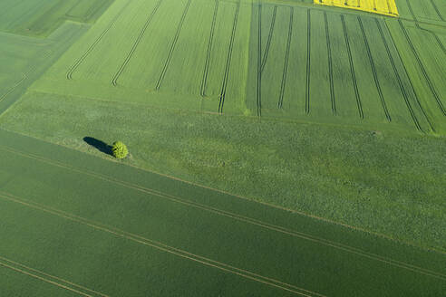Aerial View of landscape with solitude tree in meadow and agricultural fields, springtime, Franconia, Bavaria, Germany - RUEF02240