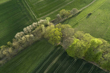 Abstract aerial view of rural landscape with agricultural fields, meadows and trees, springtime, Franconia, Bavaria, Germany - RUEF02246