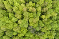Aerial view of forest with fresh vital leaves from above in early springtime, Spessart, Franconia, Bavaria, Germany - RUEF02249